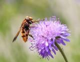Uczulenie na jad owadów? Zastosuj kilka prostych wskazówek  i chroń się przed groźną alergią