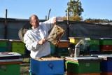 Młode pszczoły nie zdążą nabrać tkanki tłuszczowej i nie przeżyją zimy. Bo za długo było ciepło [zdjęcia]