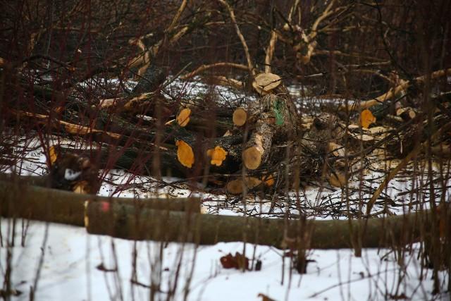 Miejsce wycinki drzew na Błoniach Czyżyńskich, w rejonie gdzie ma powstać Centrum Nauki Cogiteon