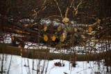 Kraków. Rusza budowa Cogiteonu. Ponad 100 drzew idzie pod topór. Główne prace mają się zacząć w marcu