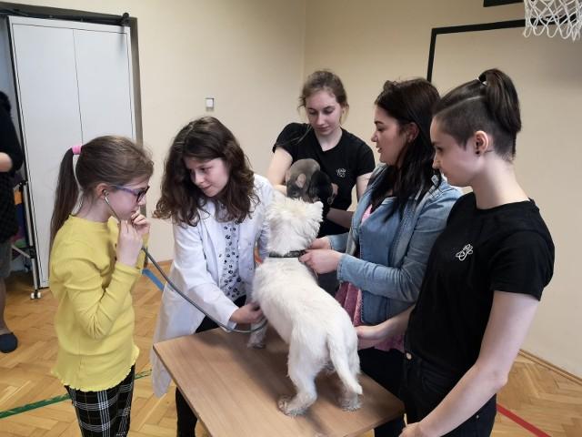 """Uczennice Technikum Weterynarii zapoznały dzieci z """"Szóstki"""" z tajnikami pracy weterynarzy oraz zasadami opieki nad zwierzętami"""