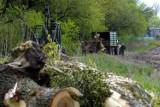 RDOŚ porzuca sprawę wycinki 340 drzew w parku Ludowym