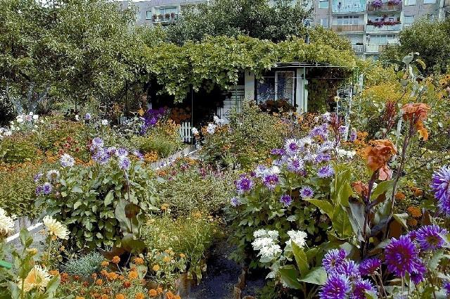 Ogródek działkowyCo roku pojawiają się nowe odmiany kwiatów i innych roślin ogrodowych.