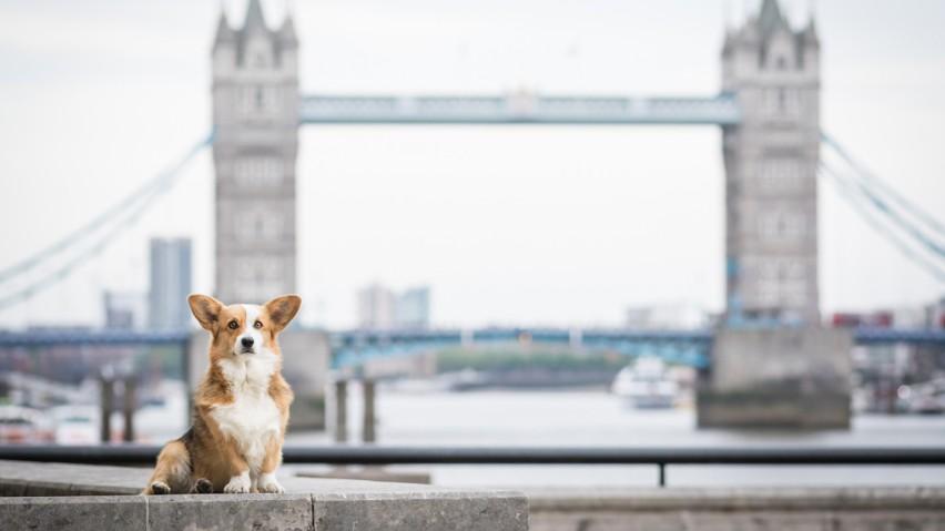 Te rasy psów są uwielbiane przez Europejczyków. Która faworytem w Polsce? Psów tych ras jest u nas najwięcej