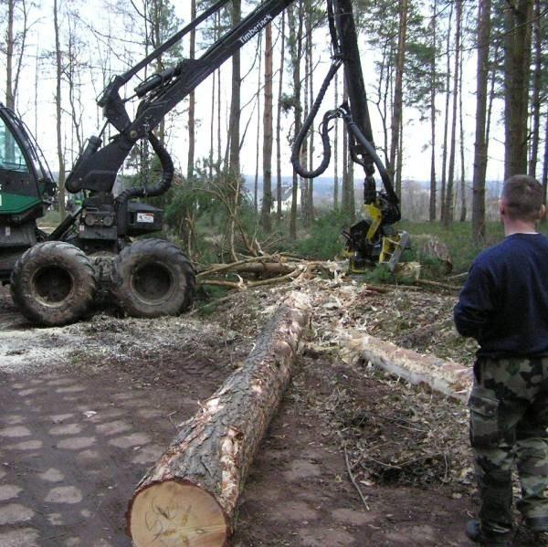 """Pierwsza maszyna rozpoczęła wycinkę lasu pod ekspresową """"siódemkę""""."""