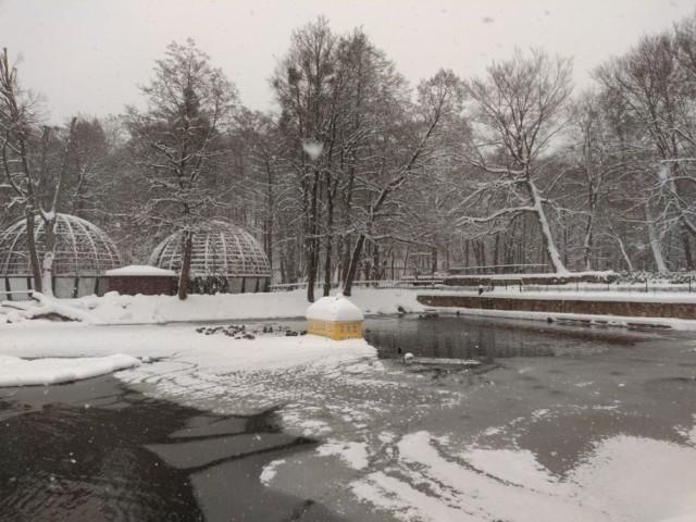 Ptasia grypa w Wejherowie! W Parku Miejskim padły trzy czarne łabędzie