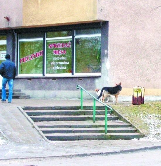 W Hajnówce problem z bezpańskimi psami jest tak duży, iż coraz trudniej sobie z nim poradzić