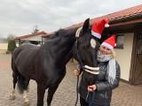 Jak Edek spod Morskiego Oka zamieszkał w Aleksandrowie Łódzkim. Ten koń miał naprawdę szczęście!