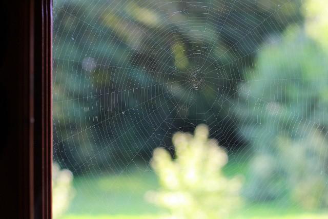 Woda z octem - przemyj parapety, podłogi przy ścianach. Pająki szybko się wyniosą z pomieszczenia, które będzie w taki sposób oczyszczone. Zobacz więcej sposobów na pająki. Kliknij strzałkę obok zdjęcia lub przesuń je gestem >>>