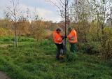 Czy uda się uratować drzewa nad zalewem w Kielcach przed zniszczeniem przez bobry i ludzi? [ZDJĘCIA]