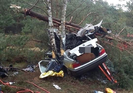 Do wypadku doszło w niedzielę (23 kwietnia) koło Łąkomina. 28-letni kierowca bmw wypadł z drogi i uderzył w drzewa ścinając je. Z bmw nic nie zostało. Do wypadku doszło na drodze krajowej nr 130 na wysokości miejscowości Łąkomin, tuż przy granicy województw lubuskiego i zachodniopomorskiego. Rozpędzone bmw wypadło z drogi. Samochód uderzył w kilka drzew ścinając je. Służby ratunkowe, które dotarły na miejsce wypadku, zastały tylko masę złomu. Z bmw nic nie zostało. – To pokazuje jak ogromna musiała być prędkość auta – mówi kom. Marcin Maludy, rzecznik lubuskiej policji. Silnik wyleciał z auta i upadł kilkadziesiąt metrów dalej. Natomiast 28-letni kierowca został wbity w bagażnik. Stamtąd wycinali go strażacy. – To cud, że przeżył tak potężne zderzenie – mówi kom. Maludy.28-latek został przewieziony do szpitala. Jest w ciężkim stanie.Zobacz też: Tragiczny wypadek na S3 pod Zieloną Górą. Czołowo zderzyły się dwa tiry [ZDJĘCIA]Zobacz też: Tragiczny wypadek na S3. Zginęło sześć osób. Jechali do pracy