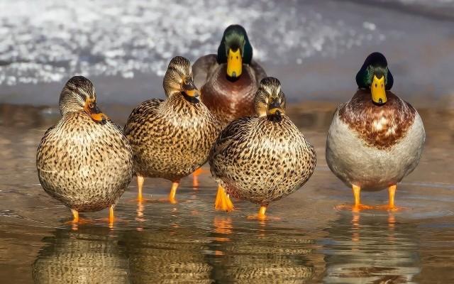 W Lesznie wykryto ognisko ptasiej grypy