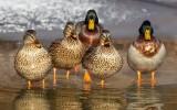 Ptasia grypa w mini zoo w Lesznie. Padły dwa ptaki. Ogród zamknięto na cały marzec