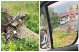 Wichury w Podlaskiem. Połamane drzewa na drogach województwa. Kilkadziesiąt interwencji straży pożarnej. Sprawdź gdzie jest burza? [ZDJĘCIA]