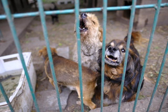 Schronisko dla zwierząt w Toruniu