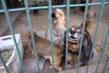 Apel toruńskiego schroniska. Pilnie potrzebne domy tymczasowe dla psów!