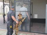 Natan i Nord - funkcjonariusze Służby Więziennej do zdań specjalnych. Na co dzień pełnią służbę w Zakładzie Karnym w Dębicy