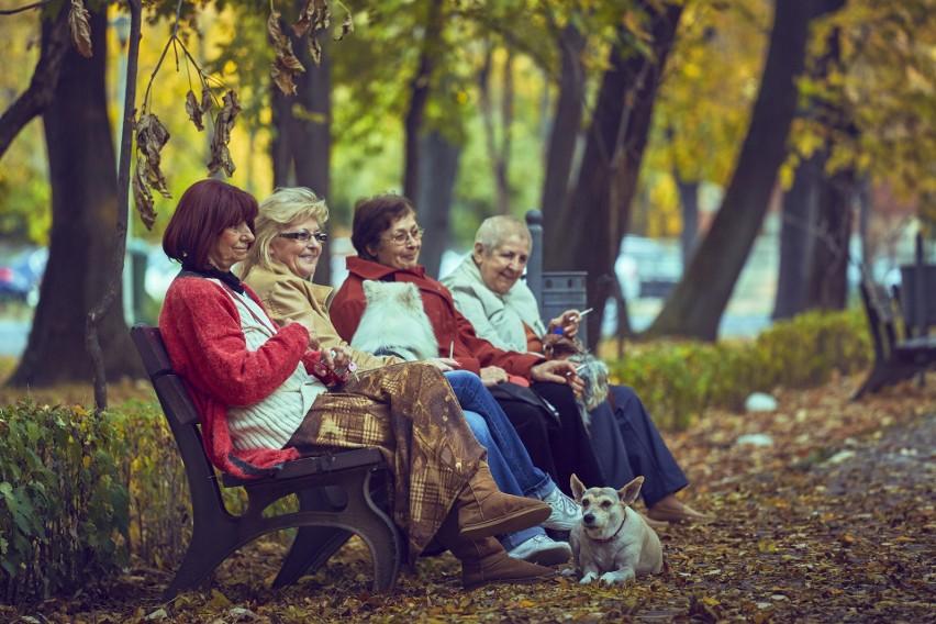 Seniorzy nie ukrywają, że jednym z największych bodźców do podjęcia pracy wciąż pozostają kwestie finansowe.