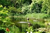 Wiosna zachwyca w Ogrodzie Botanicznym UKW w Bydgoszczy [zdjęcia, wideo]