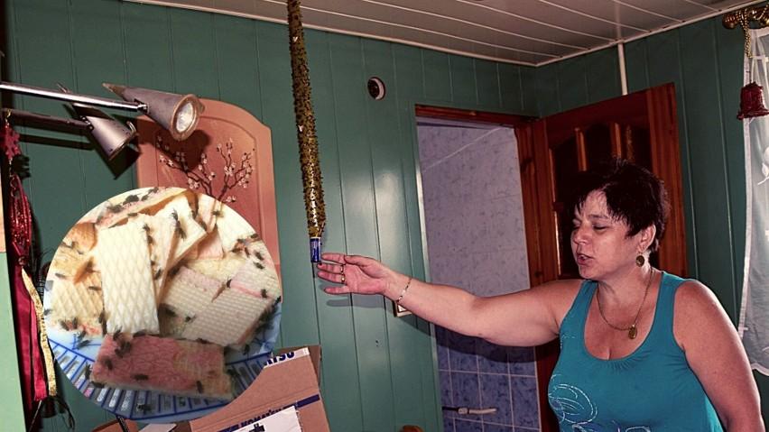 - Ten lep jest pełen much w ciągu dwóch godzin - pokazuje Jolanta Rakowska. Muchy siadają w domu na wszystkim. Nie można nawet na chwile zostawić jedzenia.