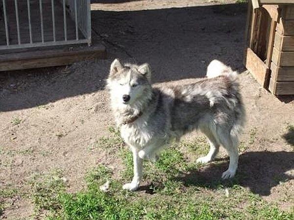 Strażnicy z Międzychodu szukają osoby, która przywiązała psa do drzewa i zostawiła go na pastwę losu. Czyli na pewną śmierć. Pies trafił do schroniska.