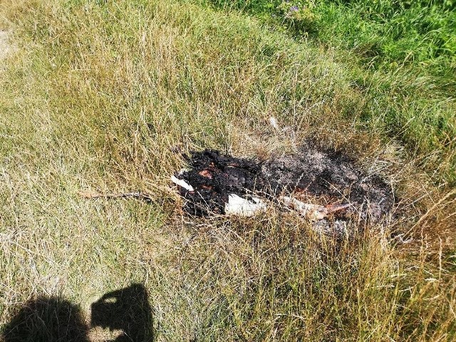 Nadpalone szczątki bociana, na które nasza Czytelniczka natchnęła się na Wilczu w Przemyślu.