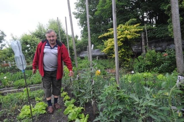 Marek Wideł ma już dość złodziei warzyw. - Człowiek tyle pracy w to włożył, a ktoś przychodzi na gotowe - skarży się.