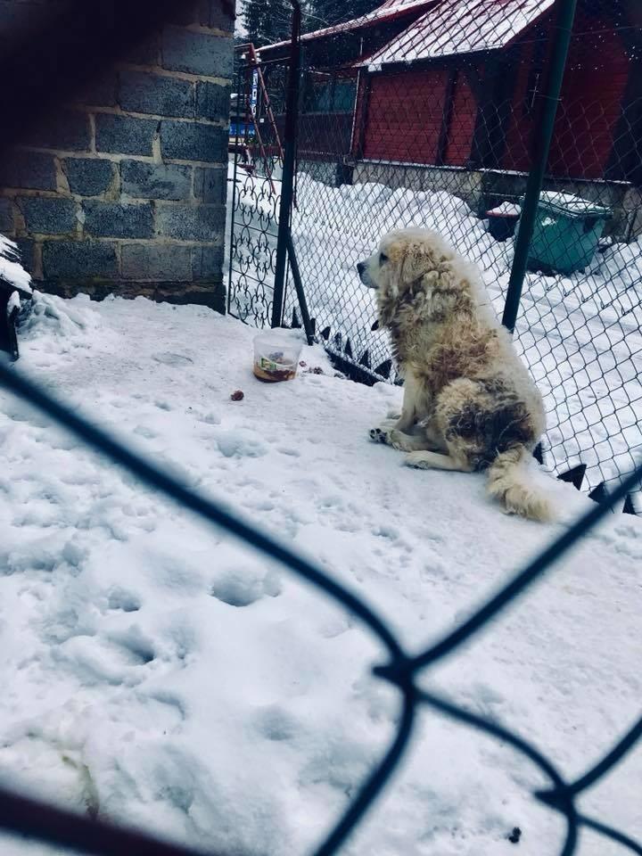 Zaniedbany Pies W Jakuszycach Właściciele żądają By