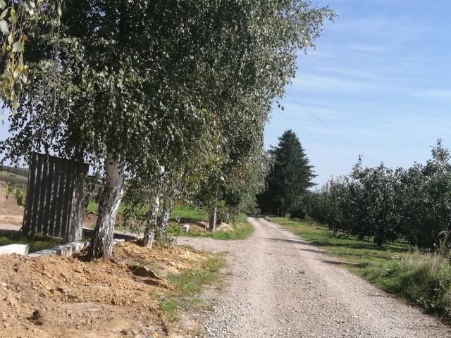 Miasto położy asfalt na szutrowej ulicy Brzozowej, graniczącej z sołectwem Chwałki