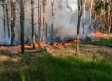Leśnicy apelują: jest niebezpiecznie sucho w lasach w Świętokrzyskiem