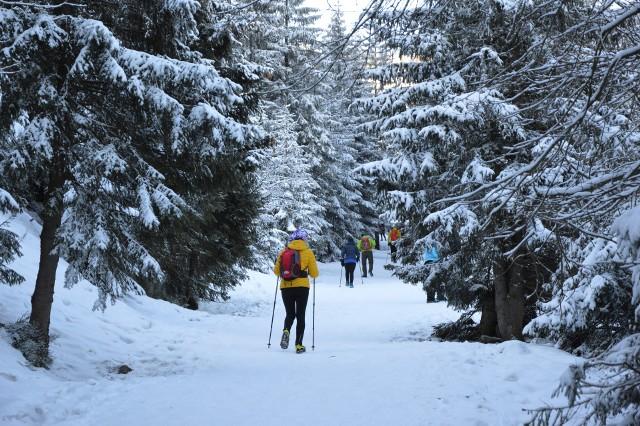 Nieco ponad dwie godziny jazdy samochodem od Zielonej Góry można jeszcze zobaczyć zimę. Piękne słońce, a jednocześnie śnieg towarzyszyły turystom, którzy wybrali się na spacer po Karkonoszach. Na Śnieżce w najbliższych dniach prognozowane są coraz wyższe temperatury, jednak w najbliższą sobotę przewiduje się opady śniegu i mróz. Lubuszanie mają więc jeszcze szanse pojeździć na nartach lub zobaczyć ośnieżone szczyty - wystarczy spakować plecak i wsiąść w samochód. Zdjęcia zrobiliśmy na szlaku czarnym prowadzącym na Śnieżkę. Momentami było stromo i bardzo ślisko - pomimo tego wielu turystów nie dostosowało ubioru ani obuwia do panujących warunków. Na szczęście - poza kilkoma upadkami - nie byliśmy świadkami poważniejszych incydentów. Zobaczcie, jak droga na Śnieżkę wyglądała w tę niedzielę.WIDEO: Zielona Góra - Karkonosze i Góry Izerskie widoczne z Winnego Grodu