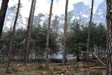 Ogłoszono zakaz wstępu do lasów pod Wrocławiem