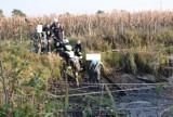 Mężczyzna zapadł się w bagno w Strzyżewie Smykowym koło Gniezna. Musieli go ratować strażacy
