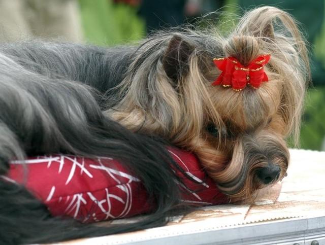 Wystawa psów w KrośnieXIX Podkarpacka Wystawa Psów Rasowych w Krośnie