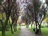 Jest szansa na remont parkowych alejek w Słupsku