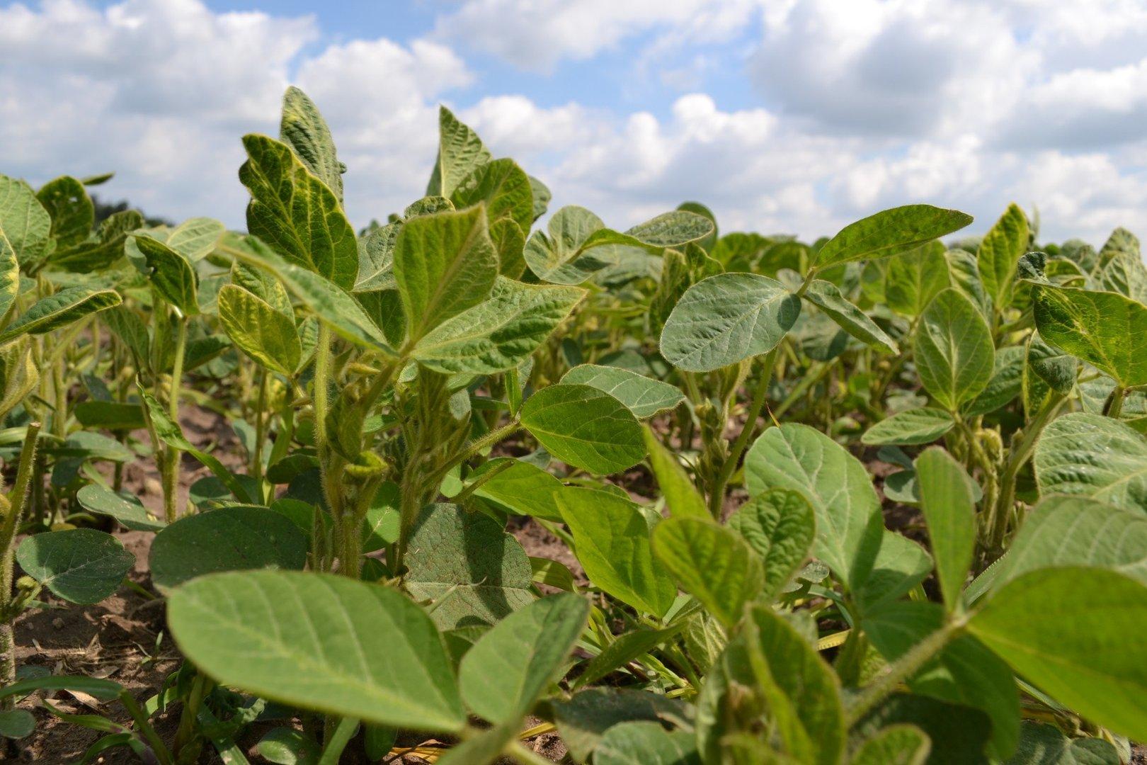 Aktualne W co może zainwestować małe gospodarstwo? Szansą produkcja bez GMO QD44