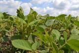 W co może zainwestować małe gospodarstwo? Szansą produkcja bez GMO