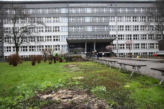 Wycinka drzew przed wejściem do budynków Uniwersytetu Pedagogicznego przy ul. Podchorążych