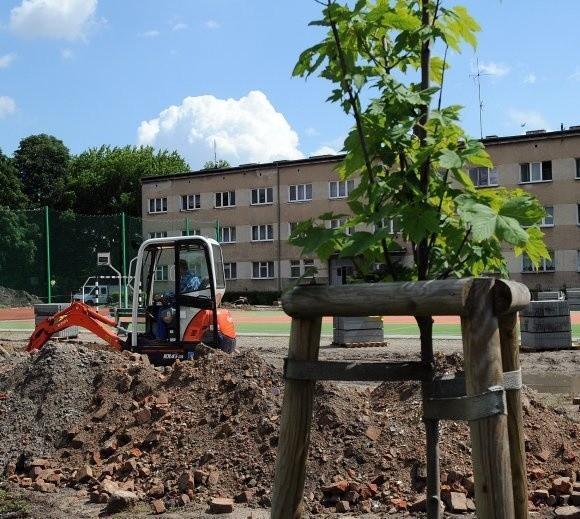 Kolejne prace na boisku przy technikum na Racibora. Czas pokaże, czy nie zaszkodziły nowo posadzonym lipom.