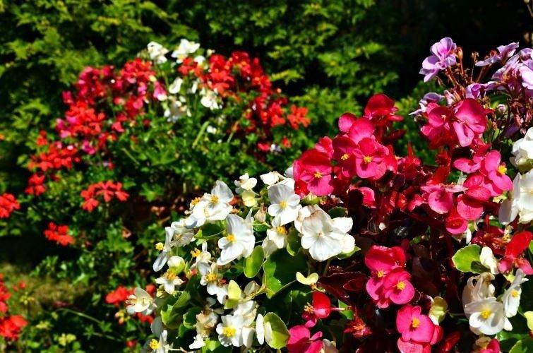Kwiaty Na Balkon Południowy Północny Wschodni Zachodni