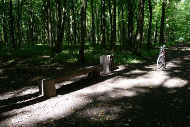 Przez Las Zwierzyniecki w Białymstoku będzie przebiegała tylko jedna nowa ścieżka