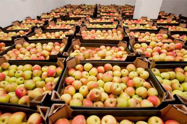 Cena hurtowa mniej popularnych odmian jabłek waha się w granicach 65-75 zł/kg
