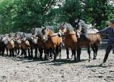 Konie z Nowych Jankowic wygrały w cuglach ogólnopolski czempionat