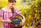 Wino białe, czerwone, różowe. Z jakimi potrawami należy je podawać? (wideo)