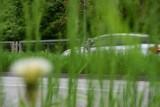 Lewica apeluje o zaniechanie koszenia trawników. Co na to prezydent Inowrocław?