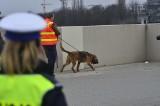 Centrum Poznania zamknięte. Ewy Tylman szukają psy z niemieckiej policji