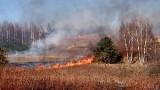 Wojkowice. Duże pożary traw to wina podpalaczy. Spłonęło prawie 10 hektarów terenu