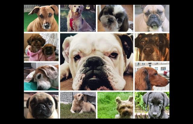 Najfajniejsze psy w Łodzi i województwie. Są niesamowite - piękne, mądre, zabawne! Światowy Dzień Psa w Łódzkiem. Zobacz ZDJĘCIA wspaniałych psiaków na kolejnych slajdach
