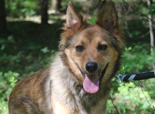Schronisko W Dyminach Chciał Adoptować Psa Na Próbę