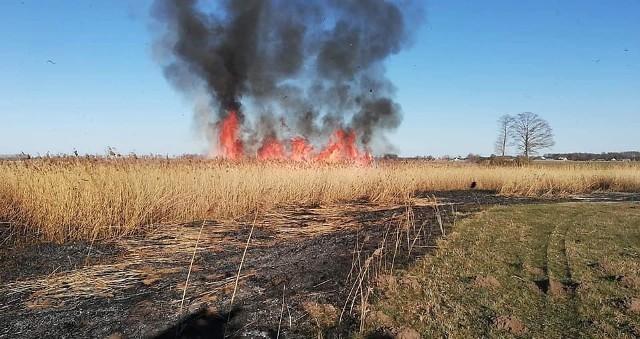 05.04.2020 r. o godz. 16.17 zgłoszono pożar trzciny w miejscowości Struniawy. Spaleniu uległ obszar około 1 hektara